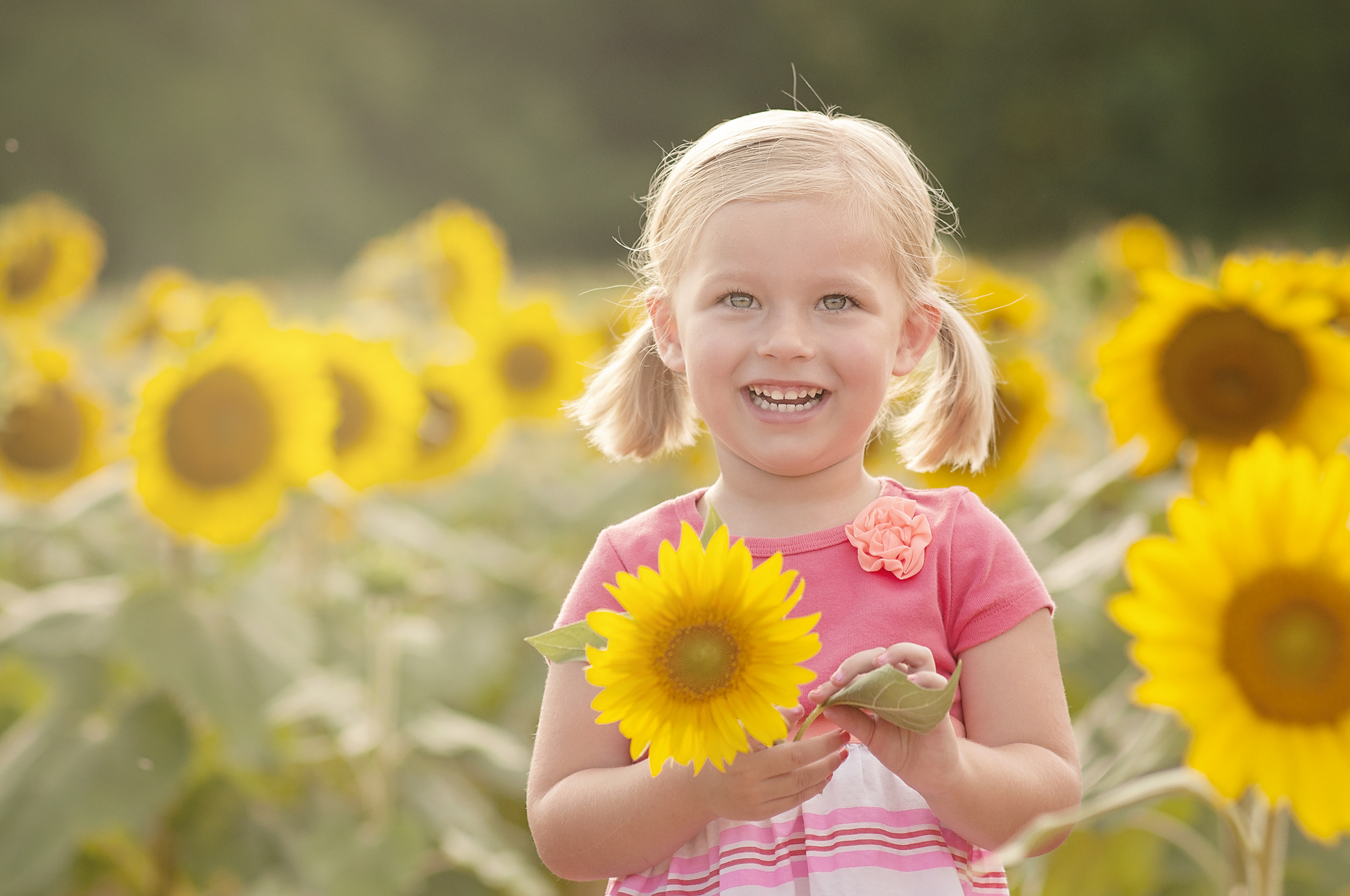 Limited Edition Sunflower Sessions | Charlotte, NC Family & Senior Photographer